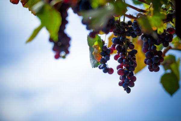 Die süßesten Früchte
