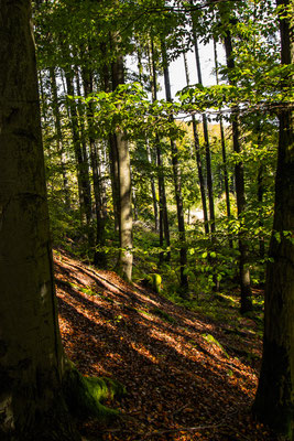 Der Waldweg, der keiner mehr war