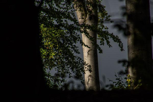 Licht am Ende des Aufstiegs