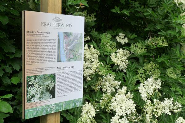 Der mit vielen Infos beschilderte Assmannshäuser-Wildkräuter-Wanderweg gehört dazu und bereichert die vielfältigen Wander- und Naturerlebnisse im Rheingau.