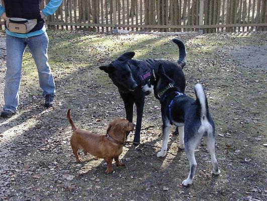 Leela mit ihrem ungleichen männlichen Harem