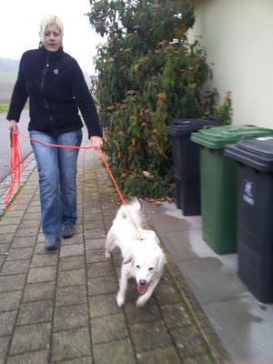 Snoopy - voll motiviert auf dem Trail