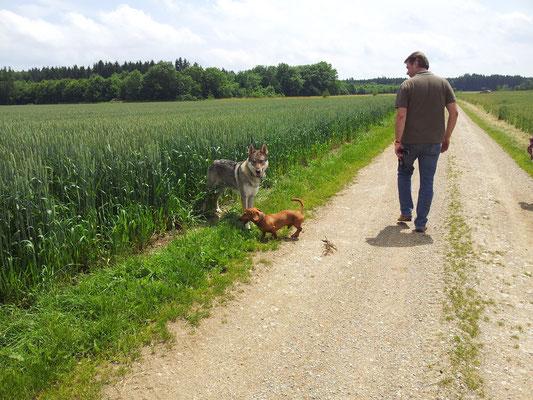 Dackles und der liebe Wolf!