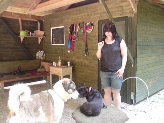 Wenn die Größten mit den Kleinsten - Owtscharka und französische Bulldogge