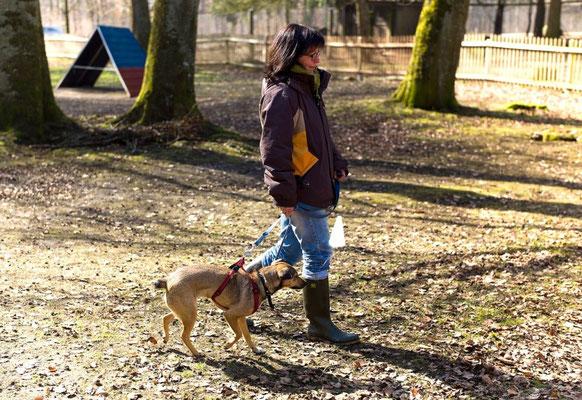 Molly - Kinderhund mit Charakter