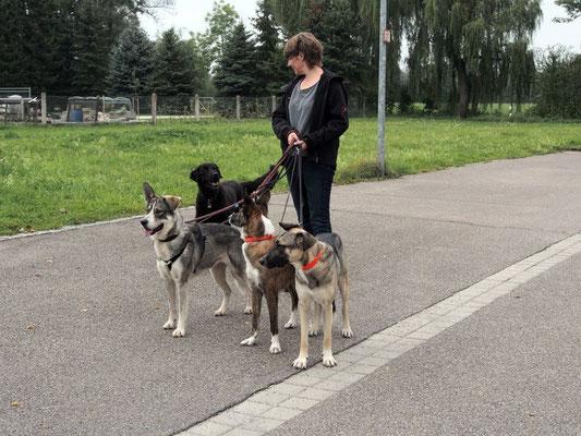 """Sonja und die """"wilde Vier"""""""