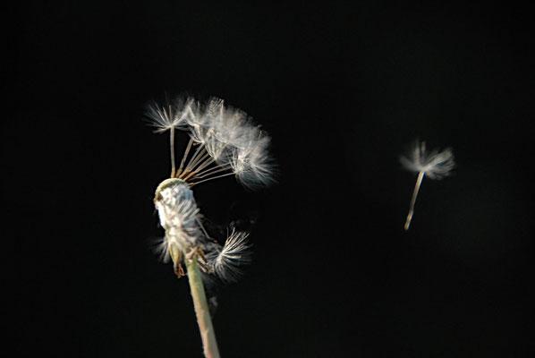 Windspiel II
