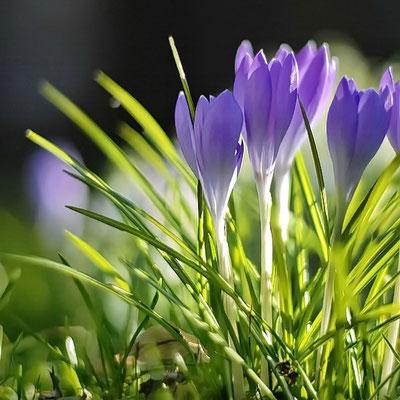 18 12 Frühlingslockung
