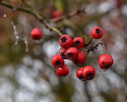 50/2015 Leuchtend Rot
