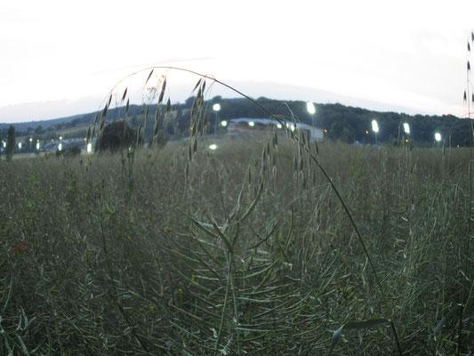 L'hippodrome, vu du bois de l'Huisserie