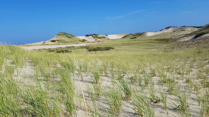 Dünenlandschaft auf Cape Cod