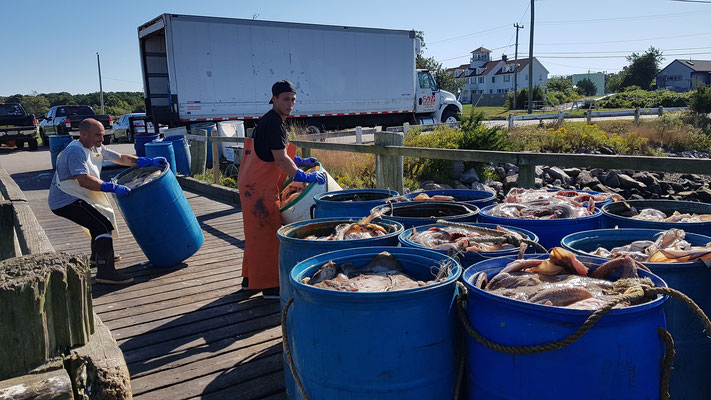 Fischköder für Lobster- und Krabbenfang