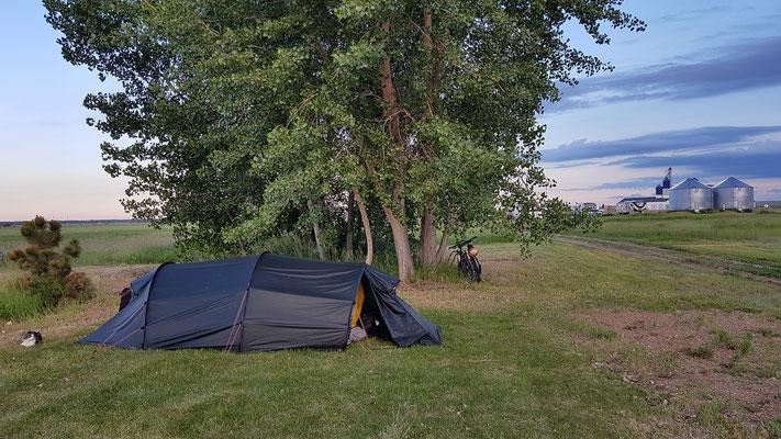 Büsi bewacht unser Zelt