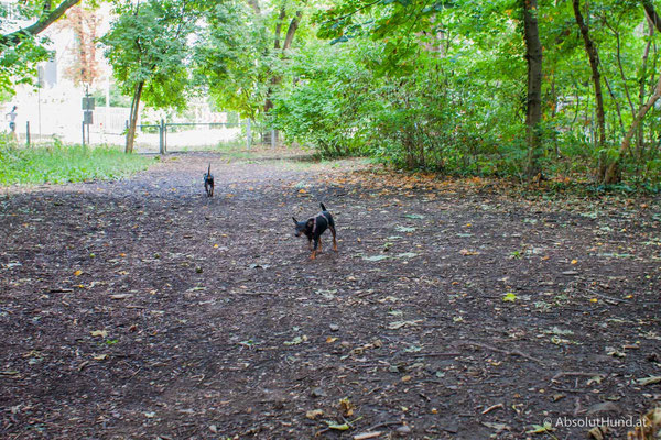 Hundezone - Herbert Mayr Park, 1230 Wien - AbsolutHund.at
