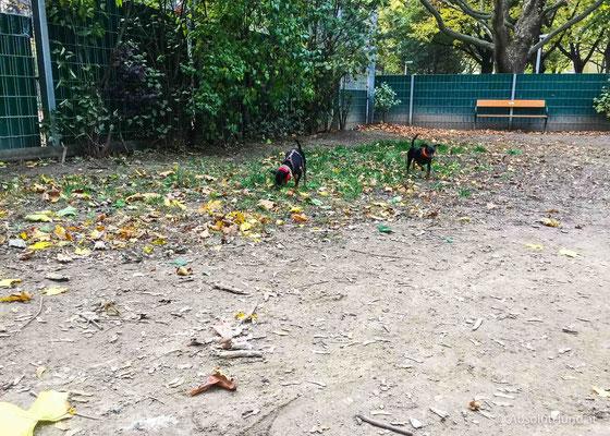 Hundezone - Fortunapark, 1100 Wien