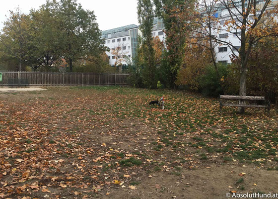 Hundezone der Veterinärmedizinischen Universität in Wien