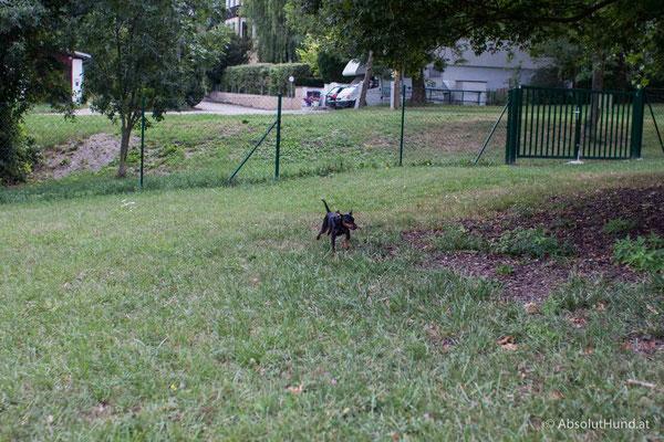 Hinterbrühler Hundeauslaufzone - am Ende der Gießhübler Straße