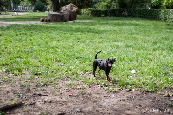 Pollux, Wien Hundezone Türkenschanzpark