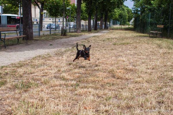 Hundezone Edelsinnstraße, 1120 Wien