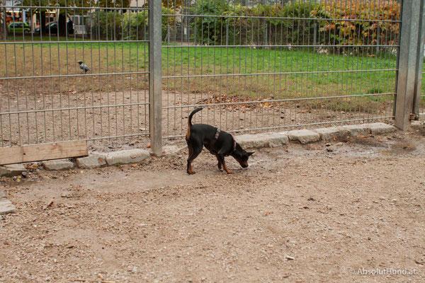 Hundezone - Allerheiligenpark 1200 Wien
