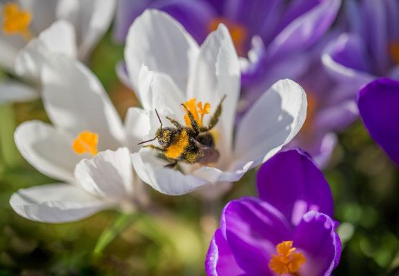 Frühlingserwachen, Foto: Dirk Pagels, Teltow