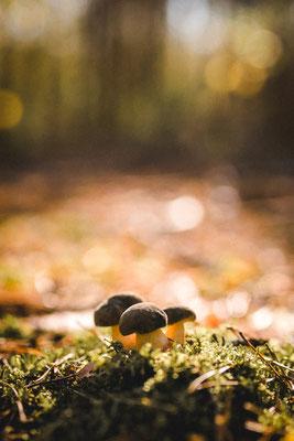 Pilze im Wald von Teltow, Foto: Dirk Pagels