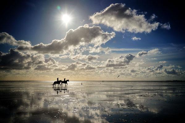 Pferde in der Nordsee, Cuxhaven 2020, Foto: Dirk Pagels, Teltow