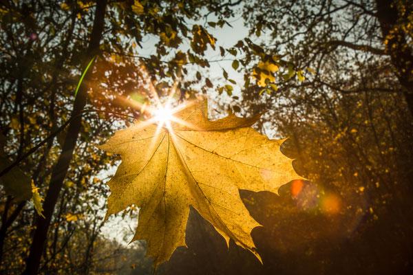 Herbstlaub, Foto: Dirk Pagels, Teltow