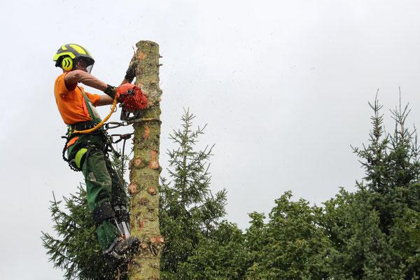 Kletterausrüstung Baum Fällen : Baumfällarbeiten baumstumpfnager