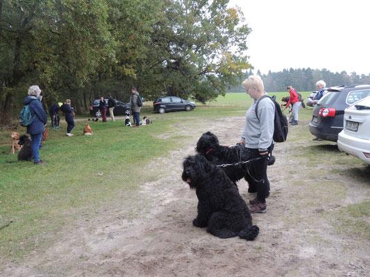 Es geht gleich los wir waren ungefähr 14 Hunde und ihre Besitzer es wurden zwischendurch Übungen absolviert. Die Wanderung dauerteungefähr 3 Stunden