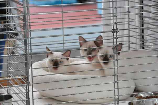 Benito, Arun, Bacary