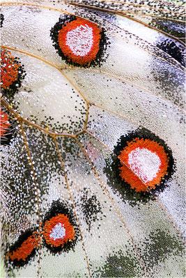 valesiacus