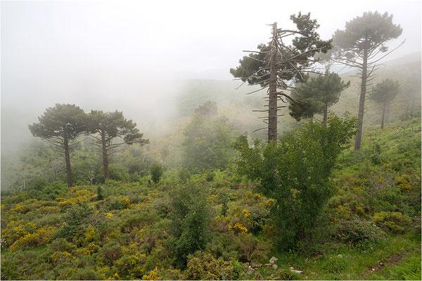 Korsika, Nordteil