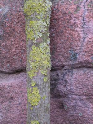 Farbenspiel der Steine