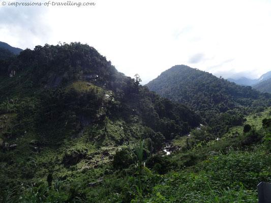 Dschungel im Vietnam