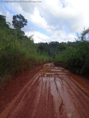 Dschungel in Kambodscha
