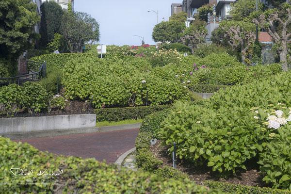 Die 8 Kurven der Lombard Street bei 27% Prozent Neigung