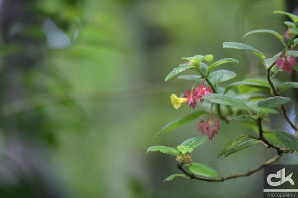 Blumen im Regenwald von Martinique