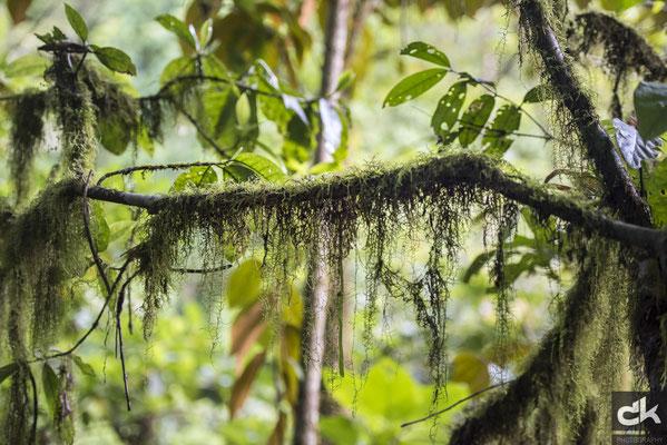 Flora im Regenwald