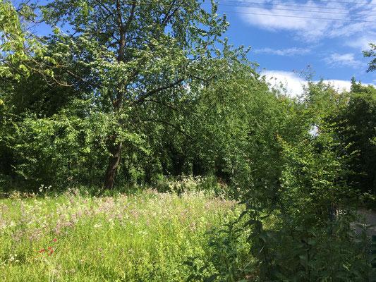 Naturnahe Wiese (Dagmar Schülke)