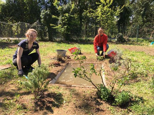 Am Rand werden kleine Sträucher gepflanzt (Dagmar Schülke)