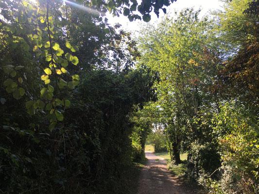 Der Grübeweg hinterm Friedhof schenkt kühlenden Schatten  (Dagmar Schülke)