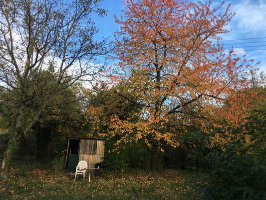 Herbststimmung auf unserem Grundstück (Dagmar Schülke)