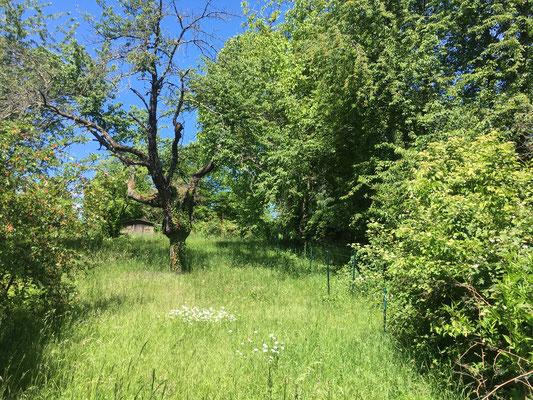 Hohes Gras - hier ist der Feldhase zu Hause (Dagmar Schülke)