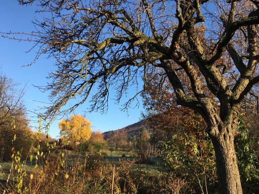 Wenn die Blätter zu Boden gefallen sind, öffnet sich der Blick für verborgene Strukturen (Dagmar Schülke)