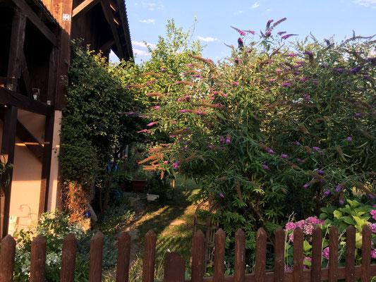 Naturnahe Gärten erfreuen Besitzer, Spaziergänger und die Natur (Dagmar Schülke)