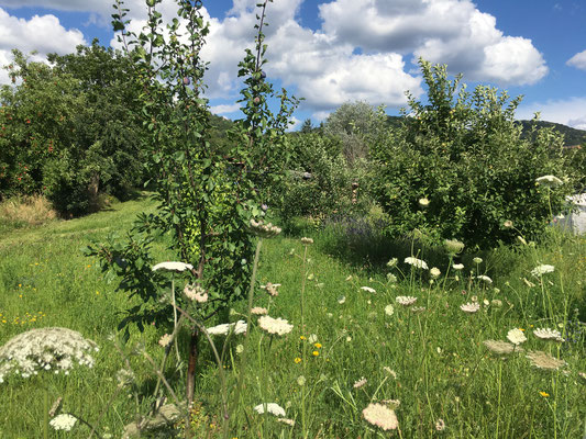 Vom Odenwald strömt kühlende Luft herab (Dagmar Schülke)