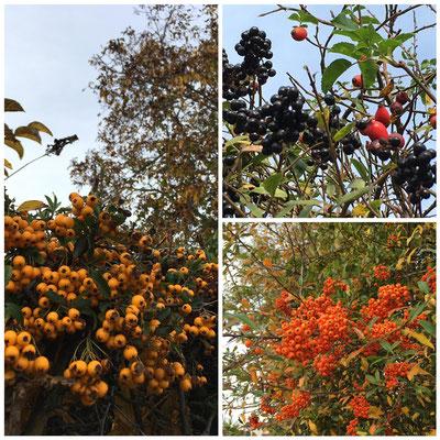 Herbstfarben (Andrea Schlechter)