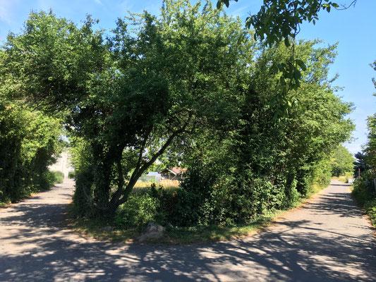 Von außen wird das Grundstück von Hecken umrahmt (Dagmar Schülke)