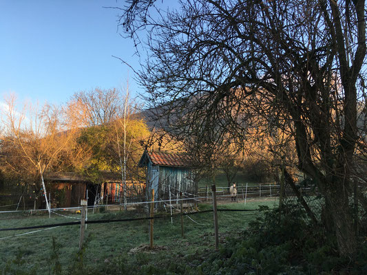 Die beiden Ställe am Mantelbach bringen das Leben mit Tieren näher (Dagmar Schülke)